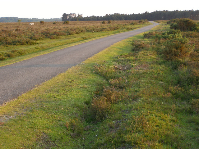Tarmac track across Black Down, New Forest