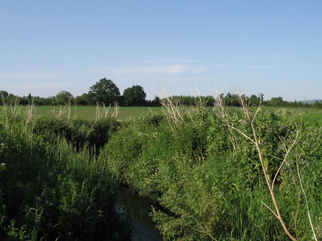 Summerham Brook