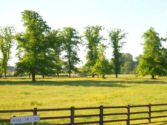 Trees and meadow at Ashby-de-la-Zouch