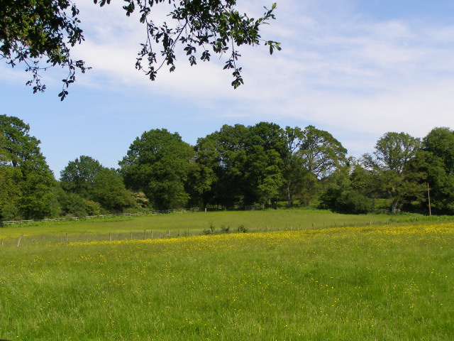 Pasture between High Corner and Dockens Water, New Forest