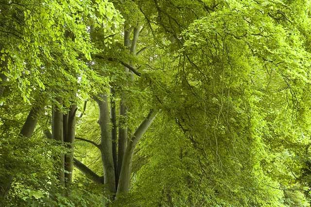 High Trees, Broadmayne