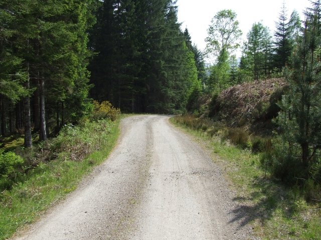 The Forest Road from Glen Luie Croft