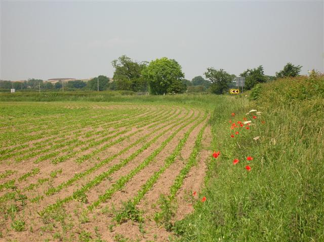 Field alongside Wetherby Road