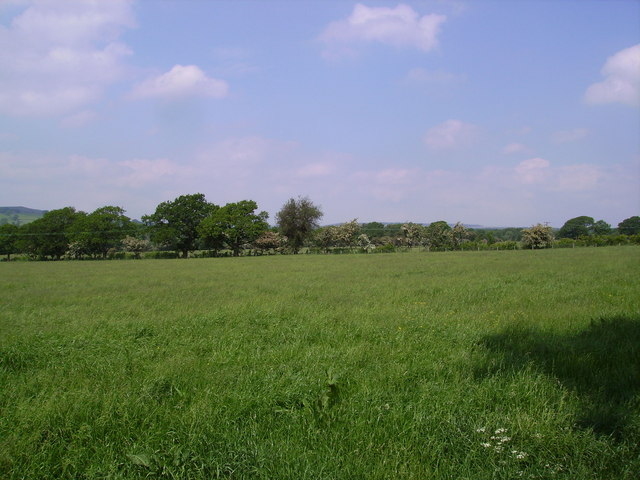 Meadow, Bolton by Bowland