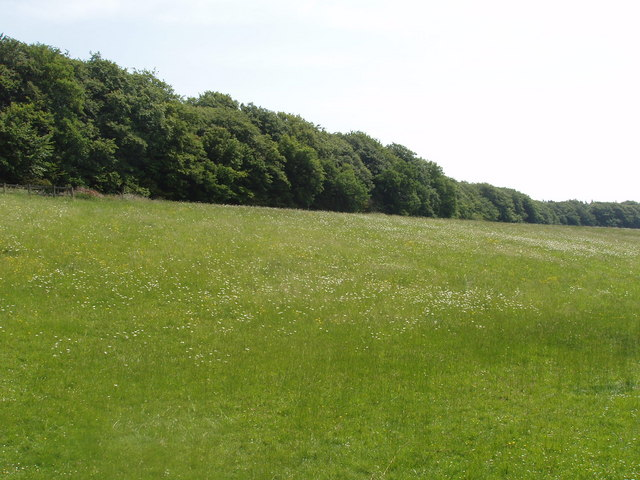 Meadow with daisies, Lily Bottom, near Hampden