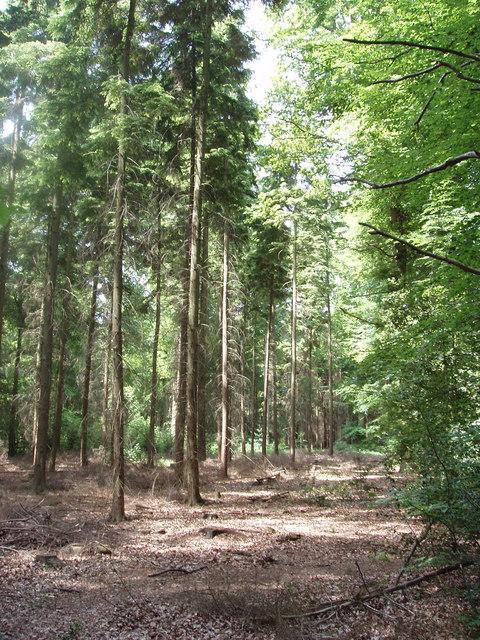 Hillock Wood, Hampden