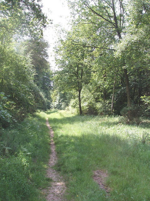 Footpath through Hillock Wood