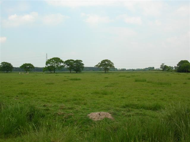 View towards Redhouse Wood