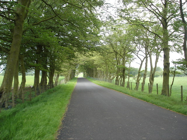 Avenue of trees approaching crossroads near Forth