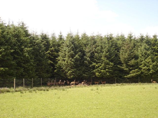 Deer Farm near Braehead, Forth