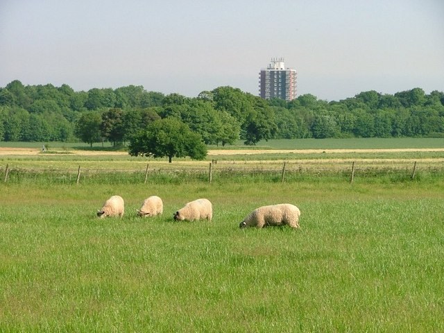 Pasture, Ormesby Grange