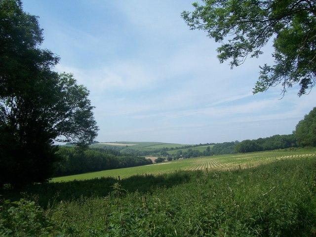 Field at Ditcham Park, towards Woodcroft Farm