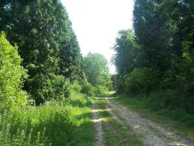 Sussex Border Path near Stubbs Copse