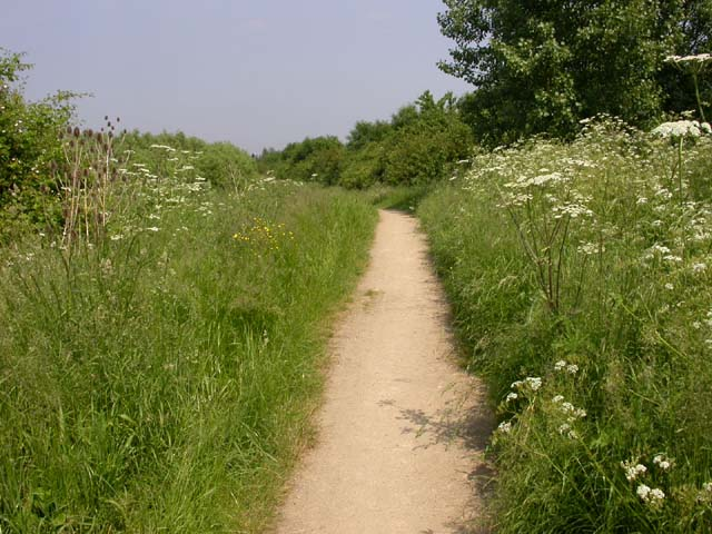 Footpath with Wildflowers