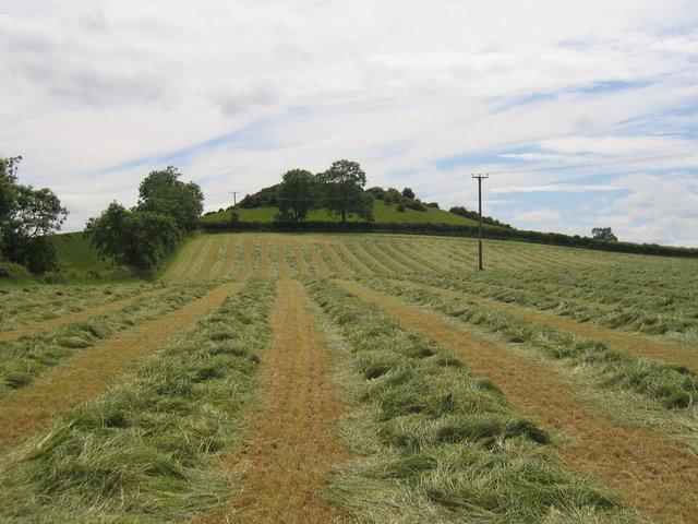 Haymaking at Yarn Hill