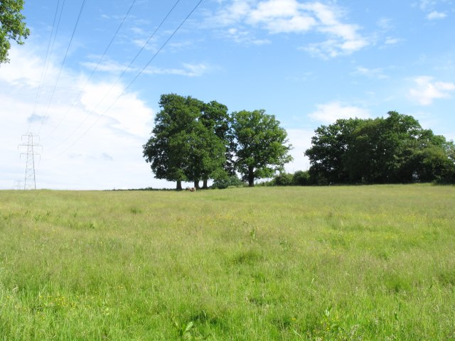Fields, trees and pylons