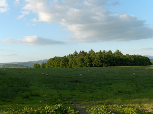 Pasture and copse, Touch