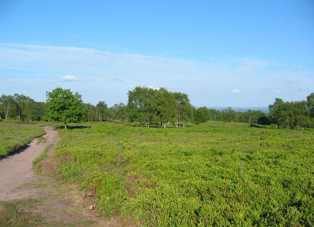 Lowland heath on Bickerton Hill