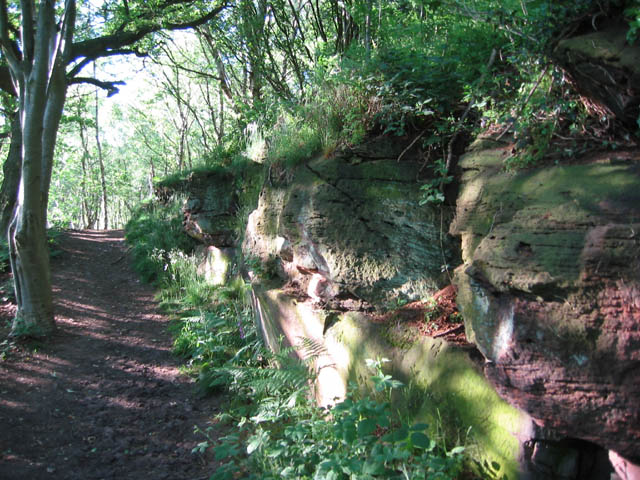 Red sandstone outcrop, Hether Wood