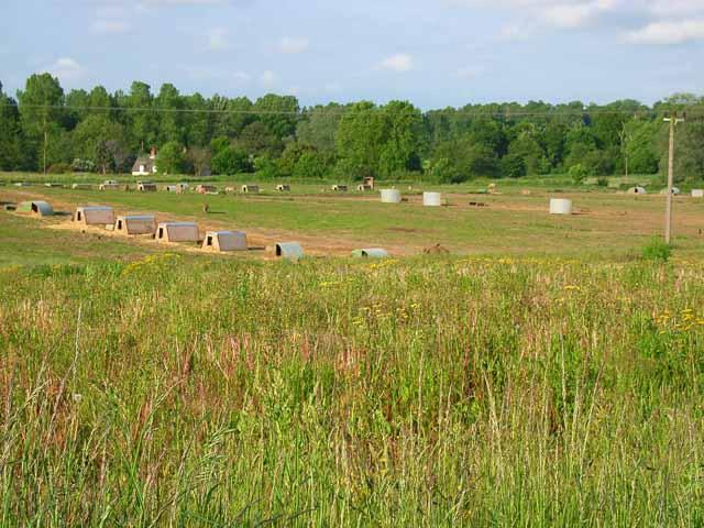 Pig farm near Sweffling