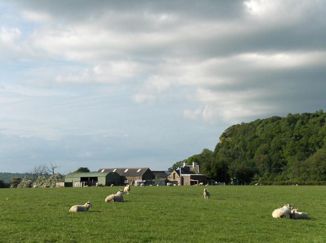 Farmland, Kaimes