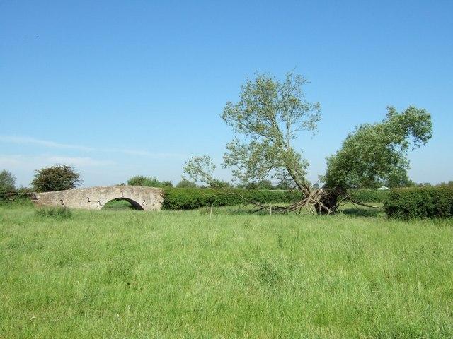 Bridge & Crack Willow
