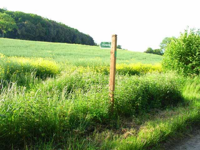 Field and footpath near Benhall Church