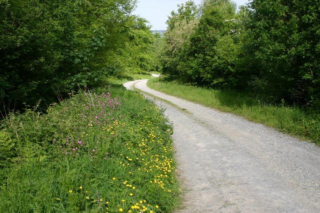 Track on Mynydd Llwydiarth