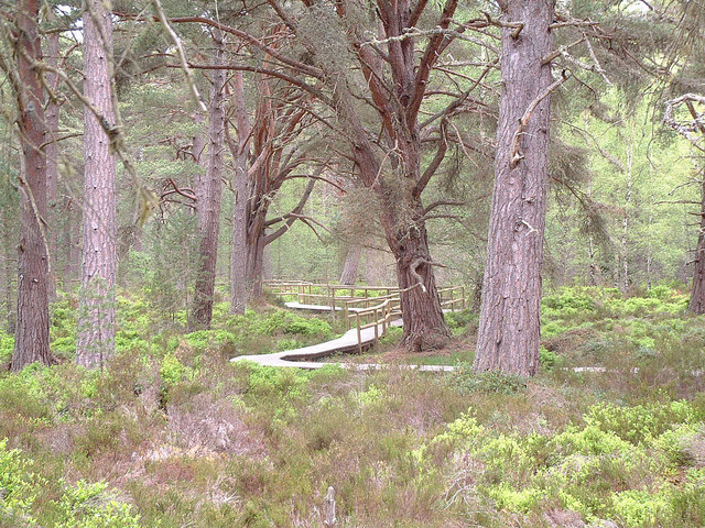 The Red Squirrel Trail