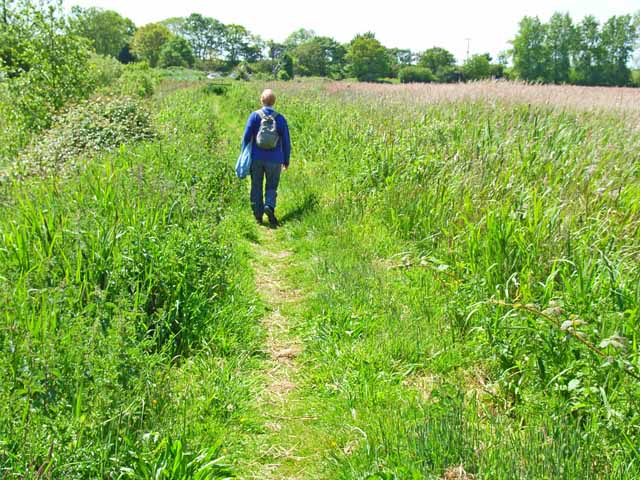 The path to the Hen Reedbeds