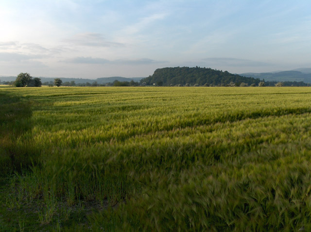 Barley field near Stirling