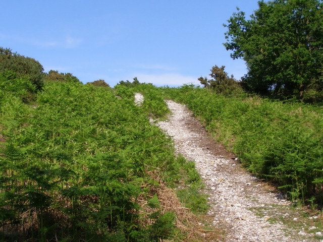 Bridleway up Dorridge Hill, New Forest