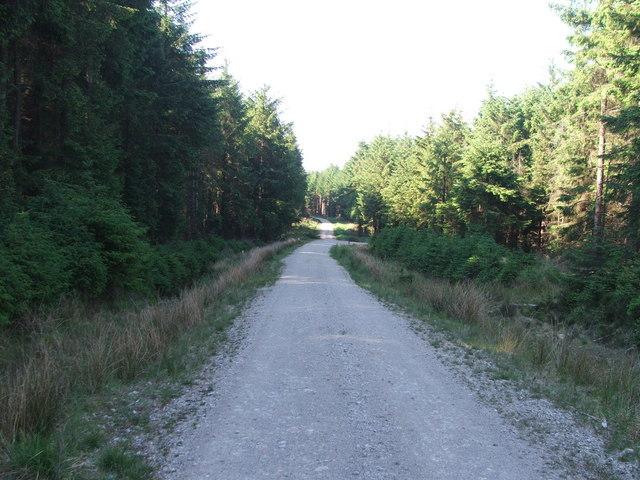 Cropton Forest.