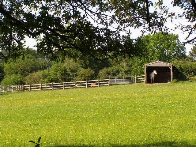 Horse in a house behind Gorley Vale Farm, New Forest