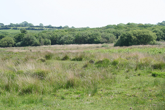 Ilston Community: Pengwern Common