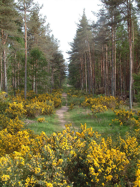Culbin Forest Path
