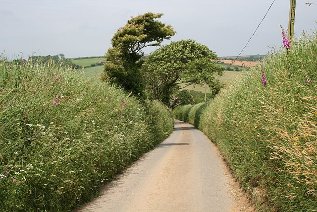 High Banks Flanking a Country Lane