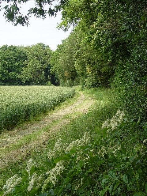 Upton Grey footpath