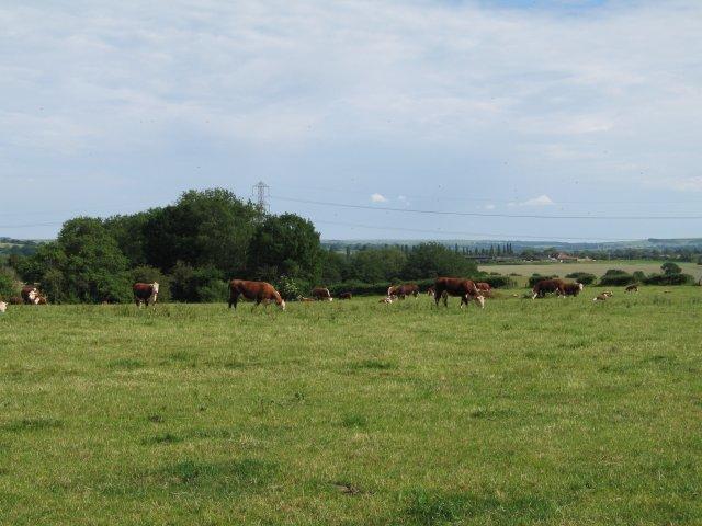 Herd at Durlett Farm