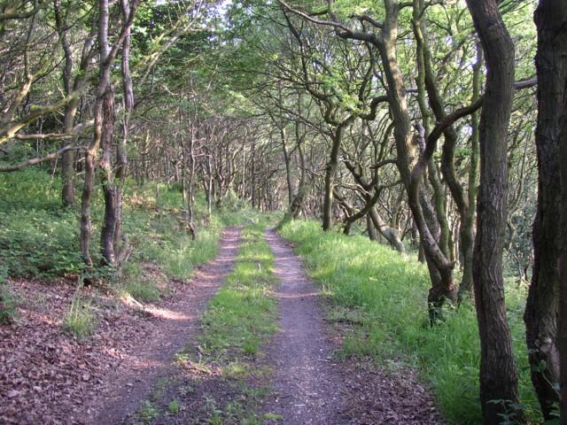 Driveway to Holme Laithe, Elland