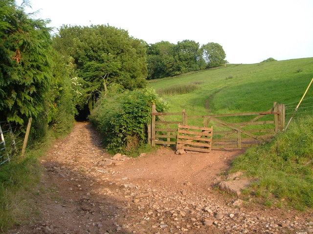 Pitson Lane
