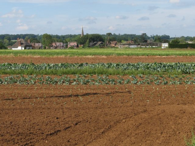 Farmland and crops near Bromham