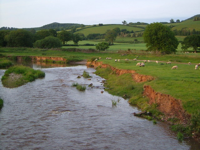 River Otter at Dotton