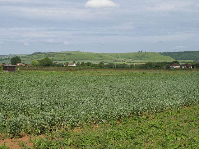 View over farmland towards Beacon Hill