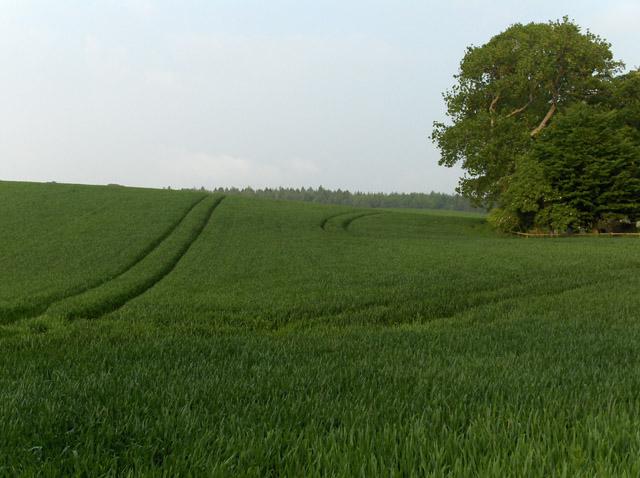 Farmland, Blair Drummond