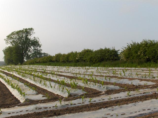 Farmland, Cuthil Brae