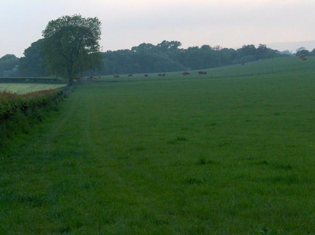 Pasture, Burnbank