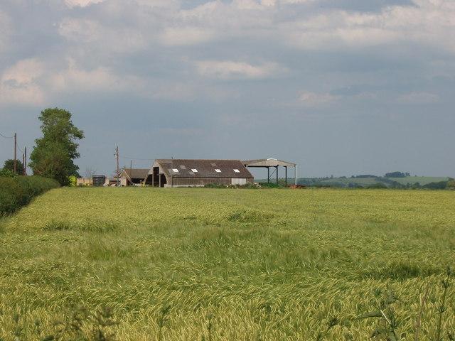 Wheat field and farm buildings, near Oakley