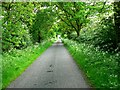 SE8133 : Bursea Lane by Roger Gilbertson
