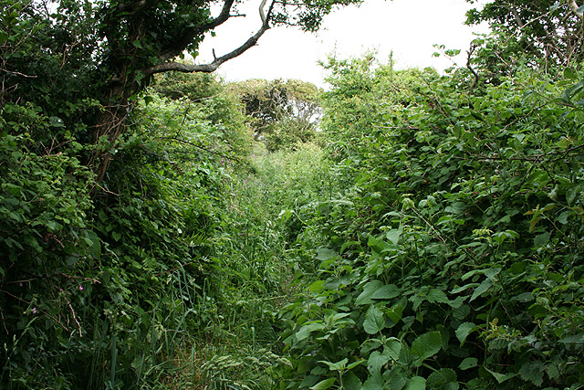Rhossili Community: overgrown footpath